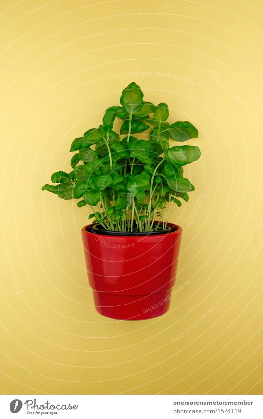 Basil in a pot Art Work of art Esthetic Basil leaf Pot Pot plant Green Yellow Red Herbs and spices Nutrition Italian Mediterranean Colour photo Multicoloured