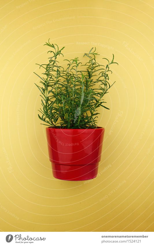 Rosemary in a pot Art Work of art Esthetic Plant Pot Pot plant Red Yellow Green Herbs Herbs and spices Colour photo Multicoloured Interior shot Studio shot