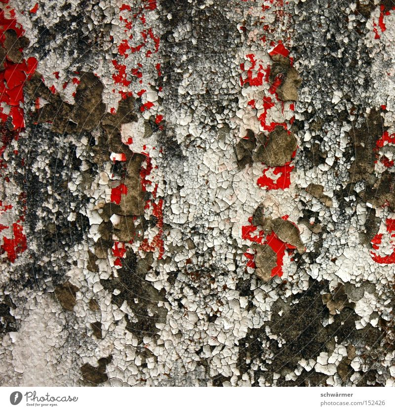 White Red Colour Wall (building) Gray Stone Weather Time Concrete Derelict Abstract Mushroom Decline Plaster Go under Mold