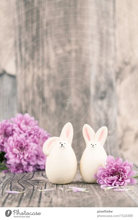 Nature Plant Flower Animal Blossom Interior design Spring Wood Feasts & Celebrations Brown Pink Decoration Pair of animals Happiness Table Cute