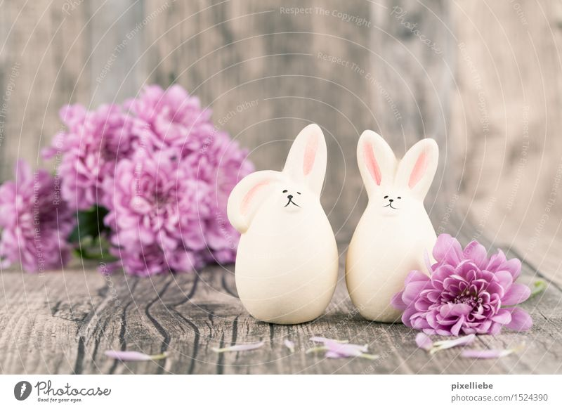 Happy Easter Interior design Decoration Table Feasts & Celebrations Nature Plant Spring Flower Foliage plant Animal 2 Pair of animals Kitsch Odds and ends Wood