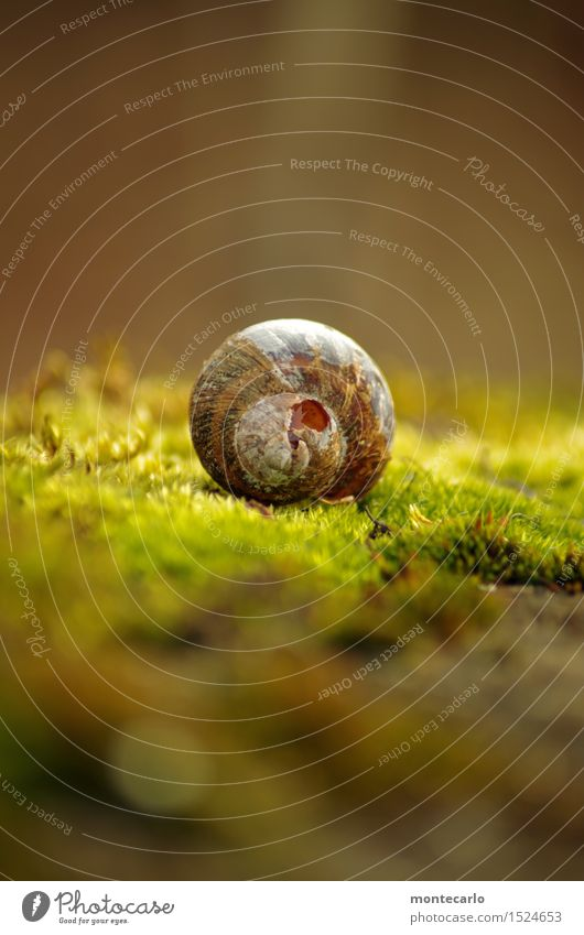 Lost Place Environment Nature Earth Sunlight Plant Moss Foliage plant Wild plant Snail shell Old Thin Authentic Uniqueness Broken Small Near Natural Round Dry