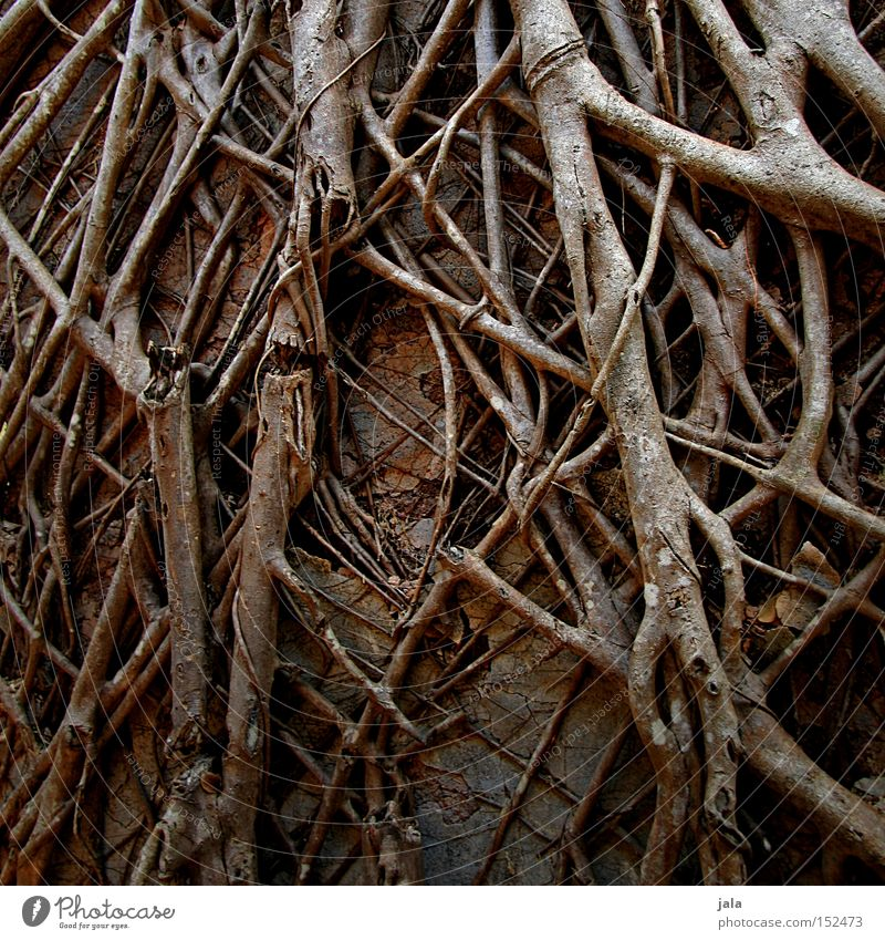 Nature Old Wall (barrier) Branch Many Strong Derelict Ruin Muddled Narrow Root Covered Cover Undergrowth Grown