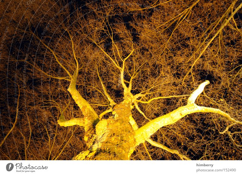 black and gold Tree Tree trunk Nature Structures and shapes Network Light Lighting engineering Design Botany Seasons Autumn Wood Park lighting technology