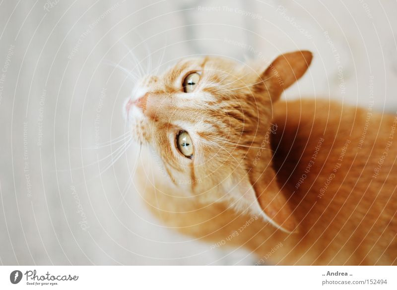 Cat Green Red Friendliness Pelt Mammal Domestic cat Whisker Animal