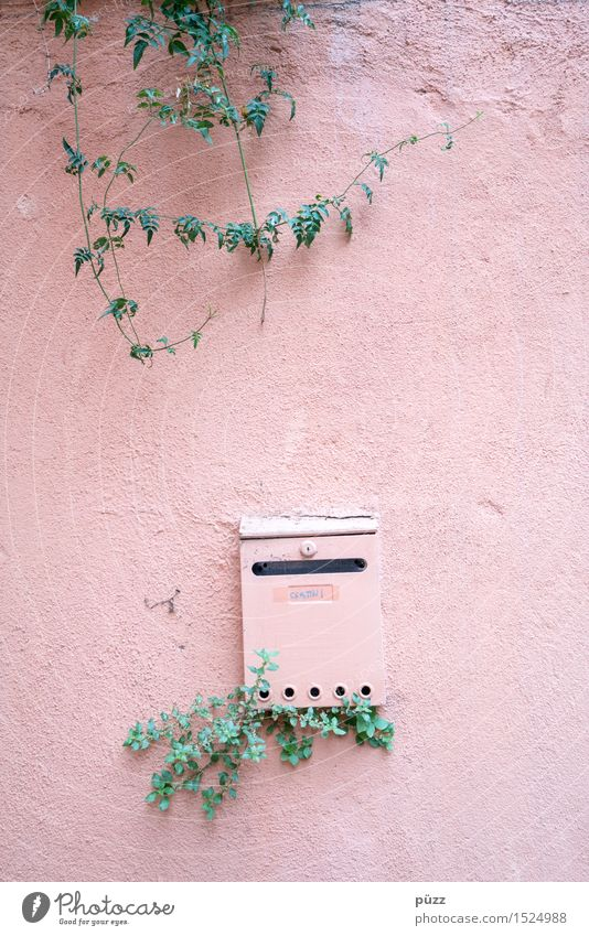 letterbox Living or residing Flat (apartment) House (Residential Structure) Nature Plant Leaf Foliage plant Village Small Town Wall (barrier) Wall (building)