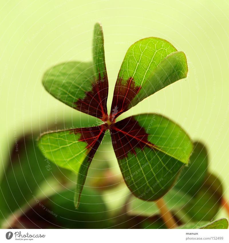 lucky charm Four-leafed clover Congratulations Happy Joy Good luck Success Birth Good luck charm Green Public Holiday