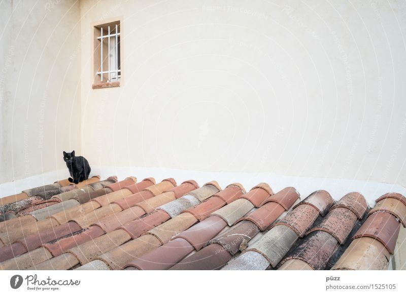 black cat Village Deserted House (Residential Structure) Manmade structures Building Architecture Wall (barrier) Wall (building) Window Roof Animal Pet Cat 1