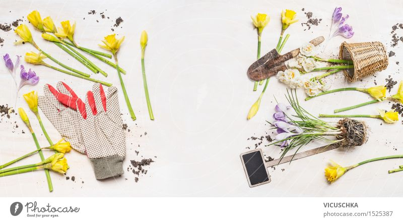 Spring flowers and pots, garden tools and work gloves Style Design Summer Garden Easter Nature Plant Flower Leaf Decoration Bouquet Wood Blossoming Jump Retro