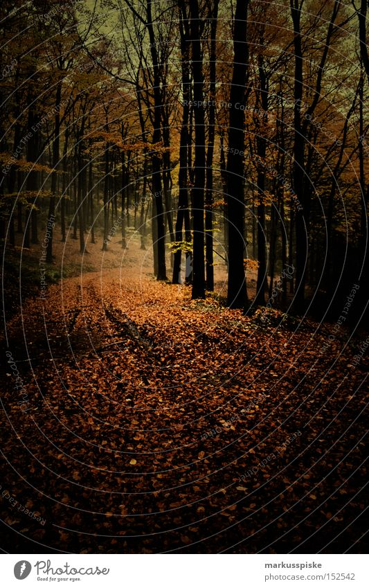 Tree Leaf Forest Dark Autumn Lanes & trails Fear Panic Mystic Autumnal