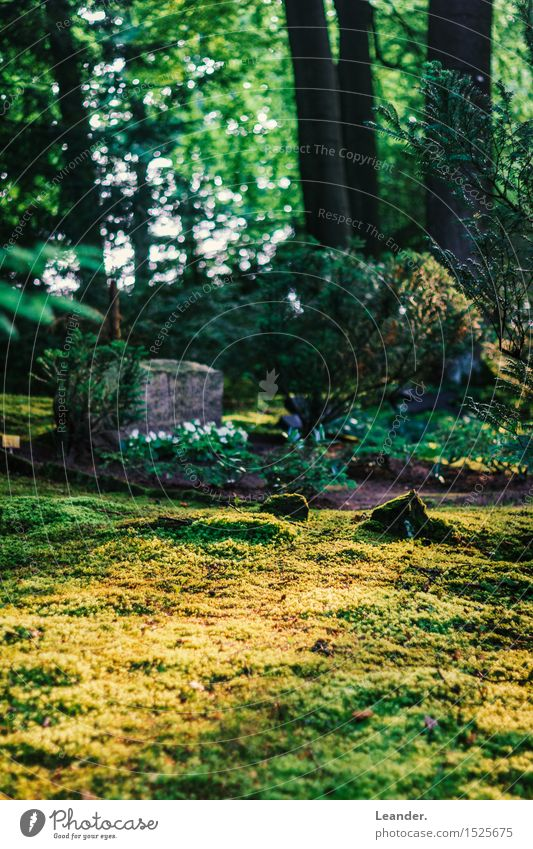 Nature Naked Plant Green Summer Landscape Environment Yellow Autumn Spring Grass Idea Beautiful weather Lawn Moss Inspiration
