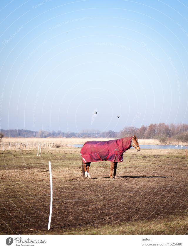 standing horse. Ride Far-off places Freedom Nature Landscape Cloudless sky Horizon Winter Grass River bank Animal Farm animal Horse Bird 1 2 Flying Stand