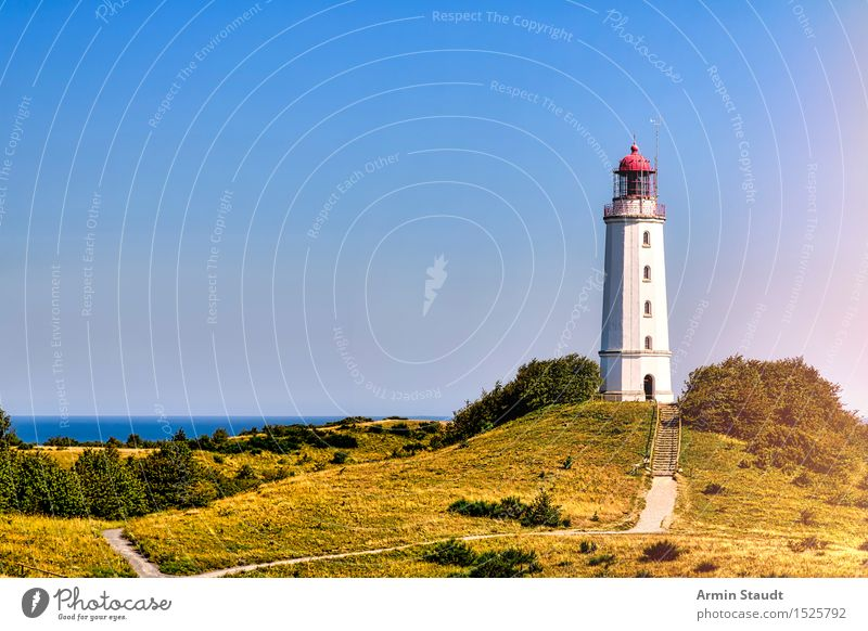 Lighthouse Hiddensee Vacation & Travel Tourism Trip Far-off places Summer Summer vacation Island Nature Landscape Beautiful weather Meadow Hill Coast Baltic Sea