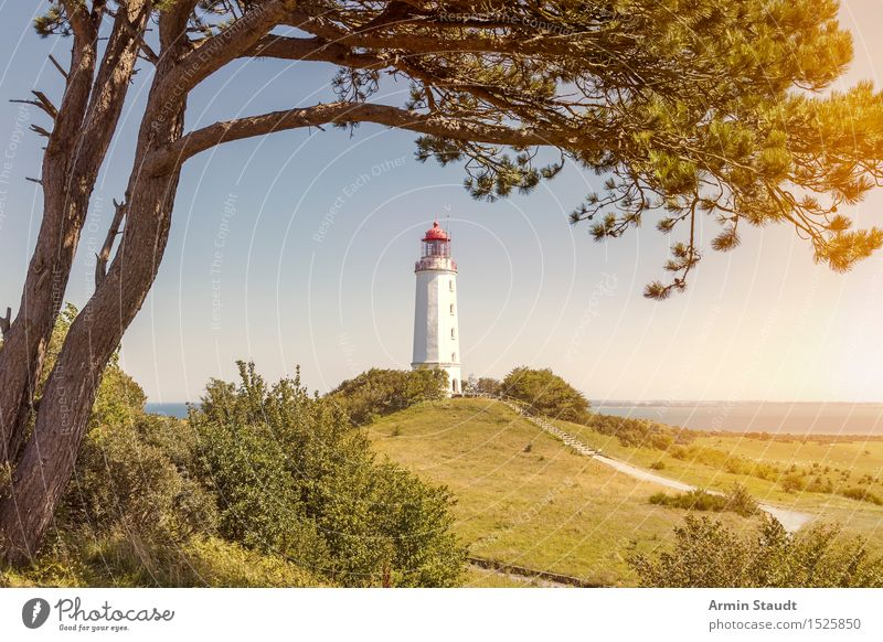 Lighthouse Hiddensee Vacation & Travel Tourism Trip Far-off places Summer vacation Architecture Nature Beautiful weather Tree Pine Hill Coast Baltic Sea Moody