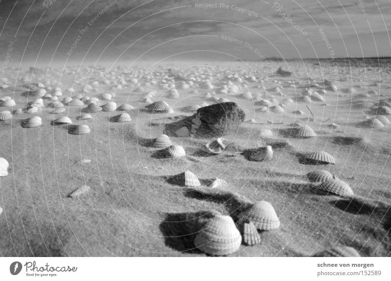 Water Ocean Beach Far-off places Stone Lake Sand Coast Wind Weather Force Mussel Black & white photo Noise