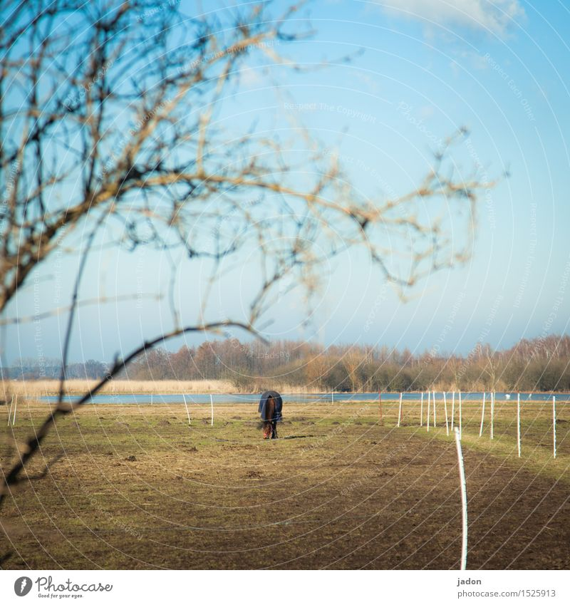 a kingdom and a horse. Well-being Environment Nature Landscape Winter Tree Meadow Field Animal Farm animal Horse 1 Eating To feed Serene Pasture pony farm