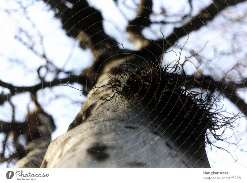 mistletoe branch Tree Shallow depth of field Dresden Park