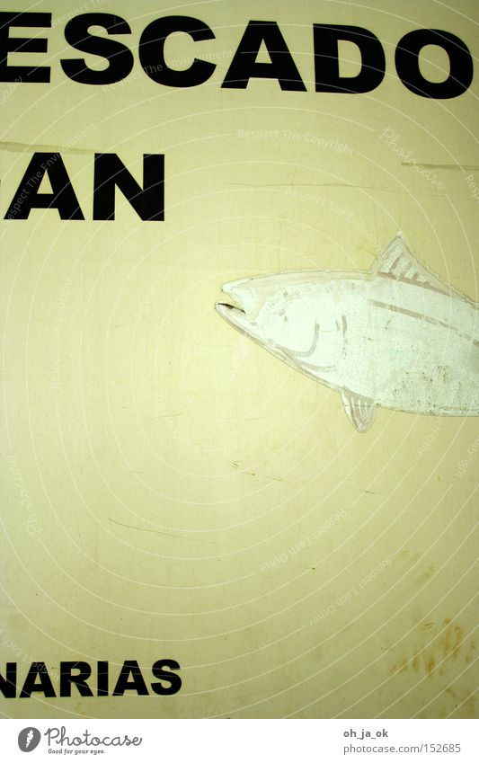Old White Fish Advertising Spain Typography Fisherman Fin Yellowed Wholesale market