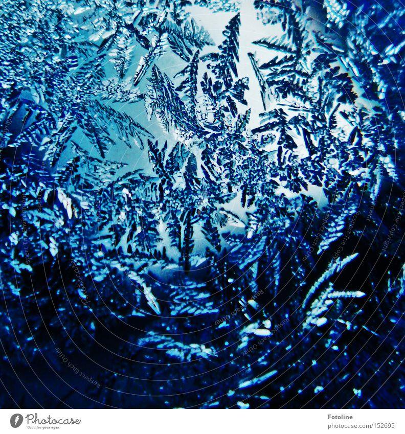 Frost flowers II Ice Cold Flower Frostwork Glass Window pane Car Window Morning Blue Black Water Winter Freeze Beautiful Esthetic