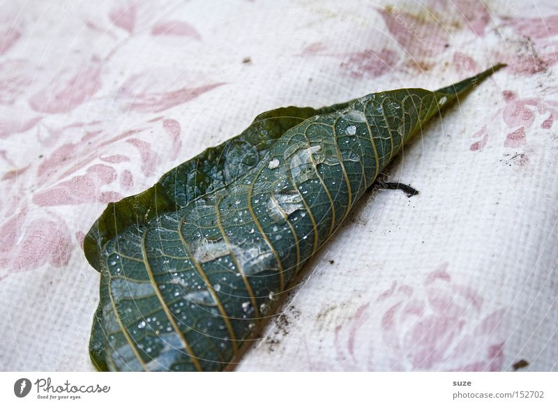 Nature Green Loneliness Leaf Sadness Autumn Natural Death Moody Gloomy Authentic Drops of water Transience Grief Seasons Decline