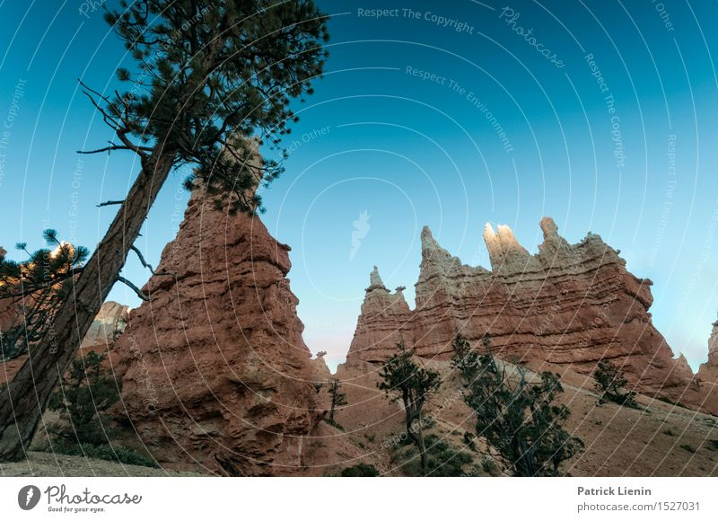 Bryce Canyon Senses Relaxation Vacation & Travel Tourism Trip Adventure Far-off places Freedom Sightseeing Expedition Mountain Hiking Nature Landscape Plant