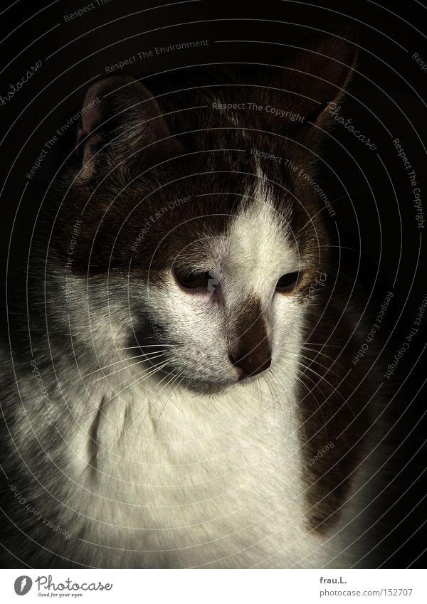 Beautiful Cat Think Pelt Fatigue Mammal Dreamily Domestic cat Animal
