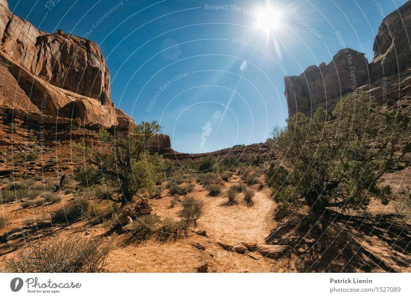 Wüstensonne Nature Vacation & Travel Blue Summer Sun Landscape Mountain Grass Sand Rock Bright Park Bushes USA Adventure Protection