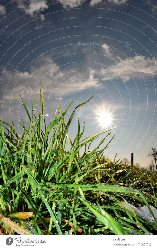 Meadow Grass Spring Weather Growth Reunification Predict Maturing time