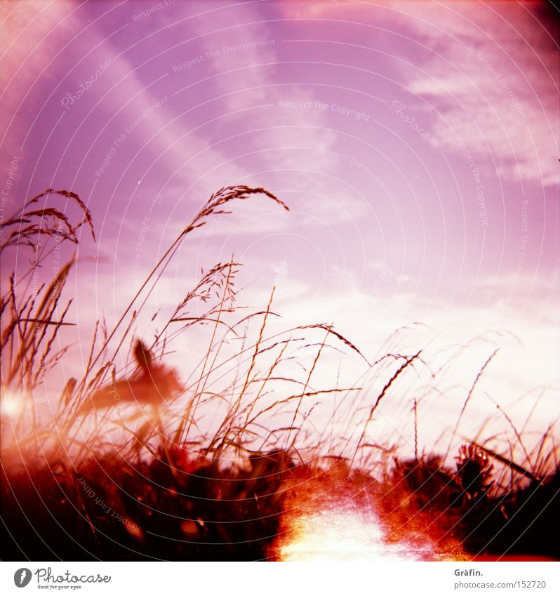 summer breeze Meadow Grass Violet Holga Sky Plant Warmth Summer Sun Blade of grass Nature Contrast Clouds Defective Beautiful Lomography Patch of light