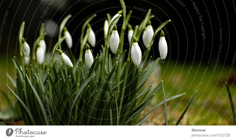 early riser Snowdrop Flower Spring Plant Garden Blossom Wake up Positive Optimism Optimist Future Arise Success
