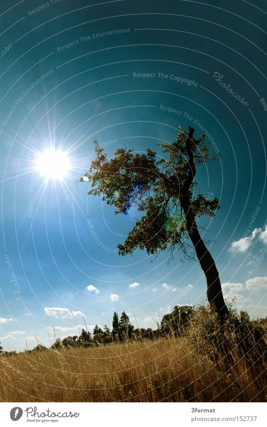 tree Summer Field Countries Real estate Tree Meadow Sky Blue Yellow Sun Individual Loneliness Life Dazzle Stand Boredom