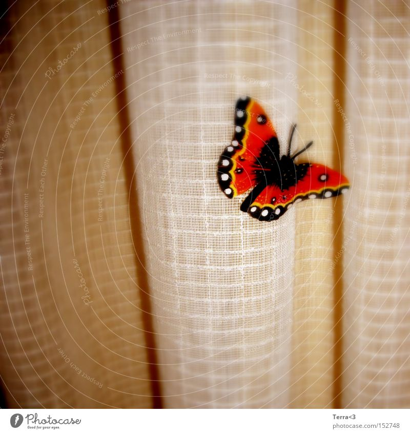 J'ai des butterfly... Butterfly Curtain Drape Wrinkles Animal Insect Wing Judder Kitsch Orange Black Red admiral Feeler Light Warmth Spring