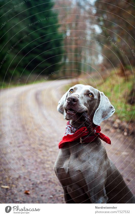Nature Dog Landscape Tree Animal Joy Forest Street Lanes & trails Playing Trip Hiking Smiling Esthetic Happiness Wait