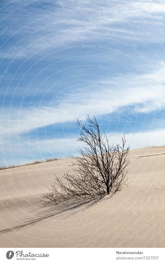 climate change Far-off places Environment Nature Landscape Plant Elements Sand Sky Clouds Summer Climate Climate change Beautiful weather Wind Tree Desert