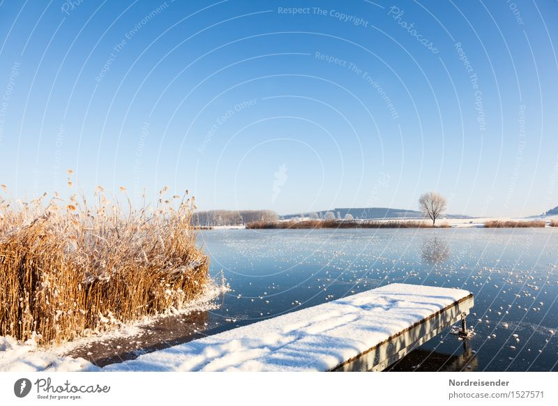Sky Nature Plant Landscape Winter Cold Snow Grass Coast Lake Moody Bright Glittering Ice Fresh Hiking