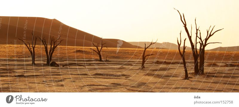 desertification Desert Tree Death Shriveled Dry Shadow Twig Branch Namibia Namib desert Loneliness Dune Environmental pollution Africa