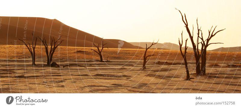 Tree Loneliness Death Environment Africa Desert Branch Dry Dune Twig Environmental pollution Shriveled Namibia Namib desert