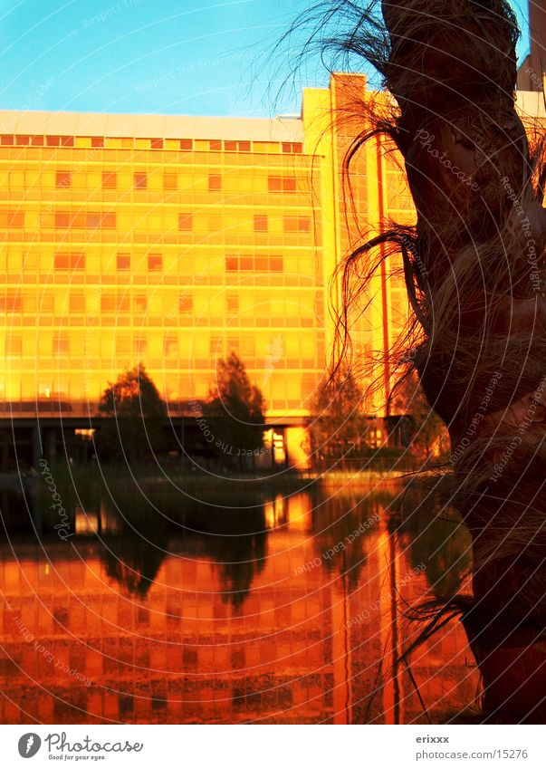 Palms in Berlin Palm tree Sunset Building Places Photographic technology Water Surface of water Water reflection Mirror image Deserted Dusk Potsdamer Platz