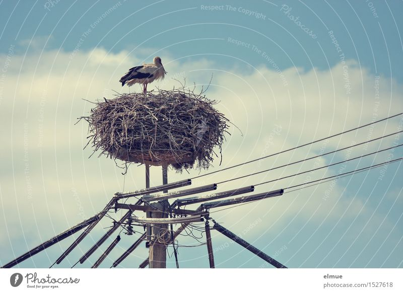 The one with the long line. Cable Sky Clouds Spring Beautiful weather Bird Stork White Stork adebar Observe Stand Wait Esthetic Happy Love Hope Longing