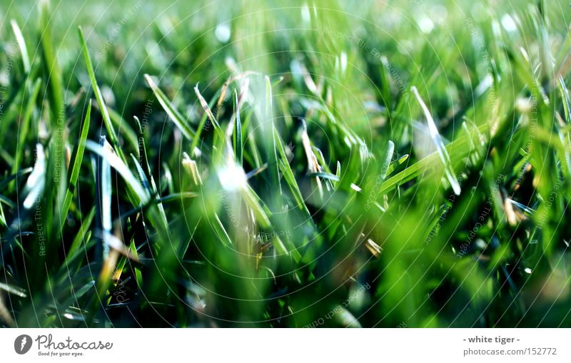 Nature Green Beautiful Summer Meadow Grass Beautiful weather Blade of grass Grass green