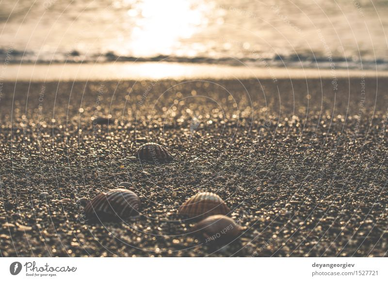 Clams on the beach Exotic Beautiful Life Vacation & Travel Summer Beach Ocean Nature Sand Coast Natural White Mussel background Shell Tropical marine seashell