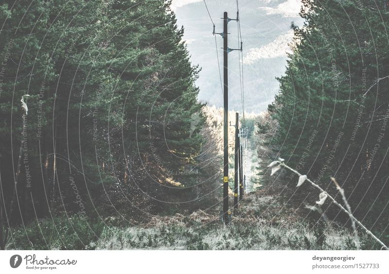 Vintage electric poles Sky Nature Old Blue Forest Wood Line Technology Energy Retro Industry Telephone Height Industrial Electric Supply