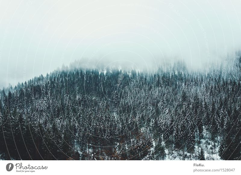 Sky Nature Vacation & Travel Green White Tree Landscape Winter Dark Forest Mountain Cold Environment Snow Natural Gray