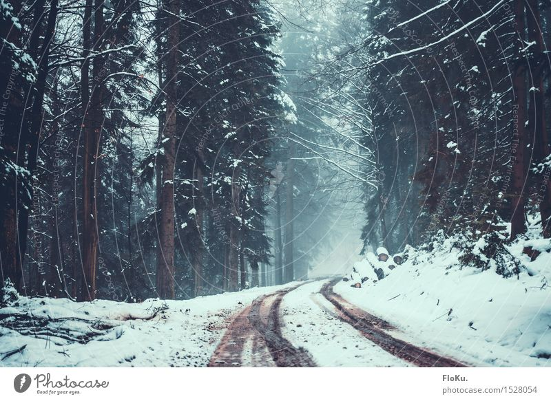 Nature White Tree Landscape Winter Dark Forest Mountain Cold Environment Street Lanes & trails Snow Germany Fog Ice