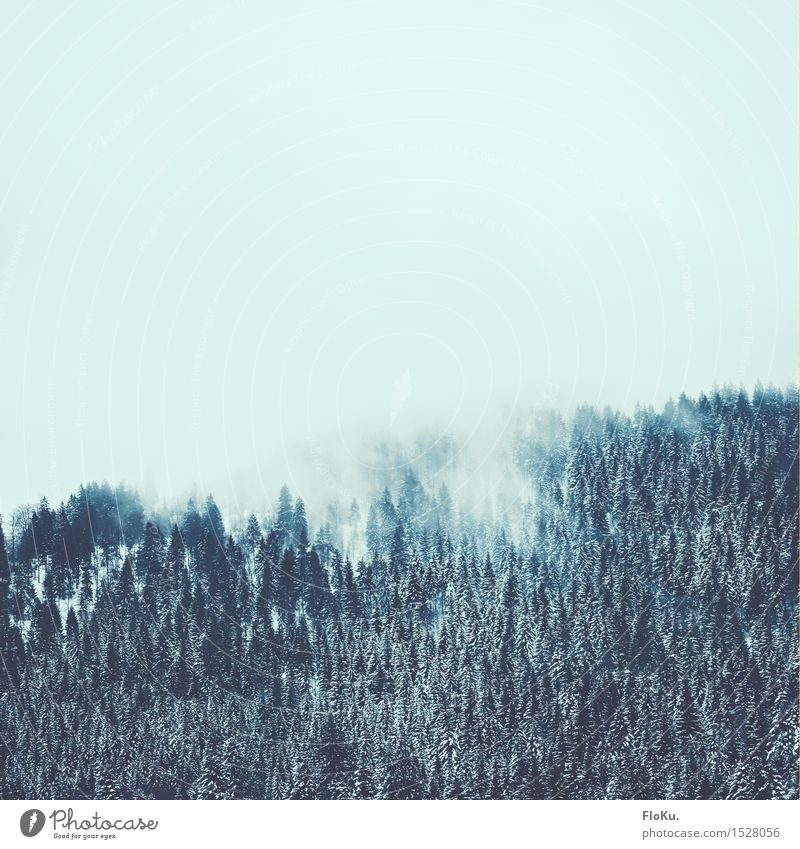 wreaths of clouds Winter Snow Winter vacation Mountain Hiking Environment Nature Landscape Elements Air Sky Clouds Weather Bad weather Fog Ice Frost Tree Forest