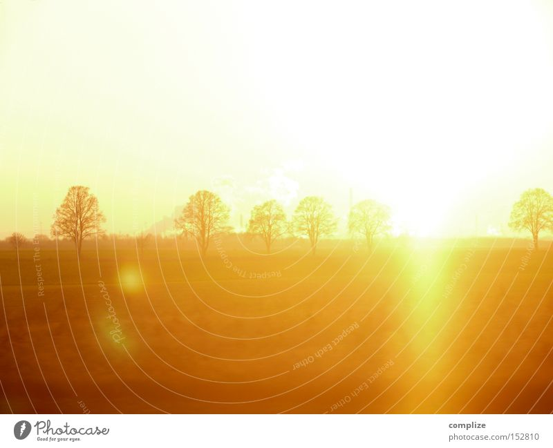 December Gold Sun Winter Nature Tree Field Dream Yellow Sunset Lighting Lens flare Radiation Reaction Multiple Clump of trees Orange Light (Natural Phenomenon)