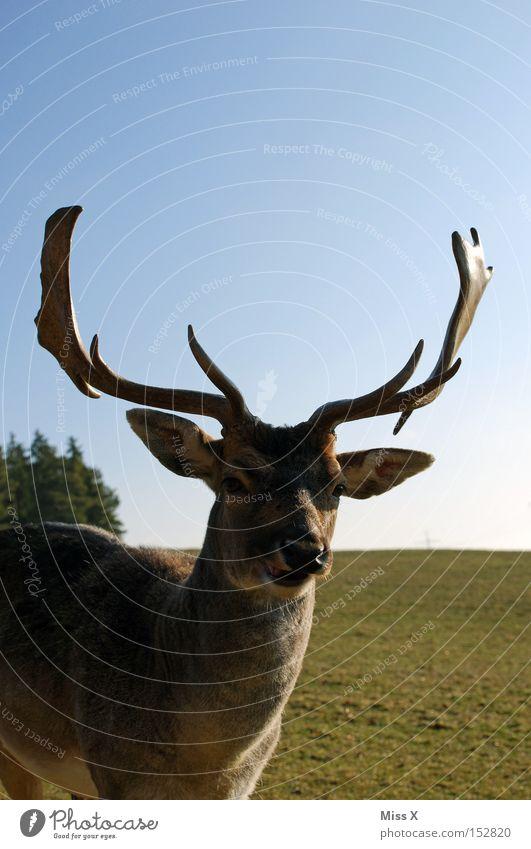 Animal Power Wild animal Exceptional Esthetic Cute Antlers Willpower Mammal Cuddly Deer Roe deer Reindeer Game park