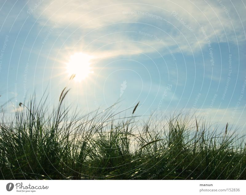 Nature Sky Sun Green Blue Summer Vacation & Travel Calm Clouds Life Relaxation Autumn Grass Spring Warmth Air