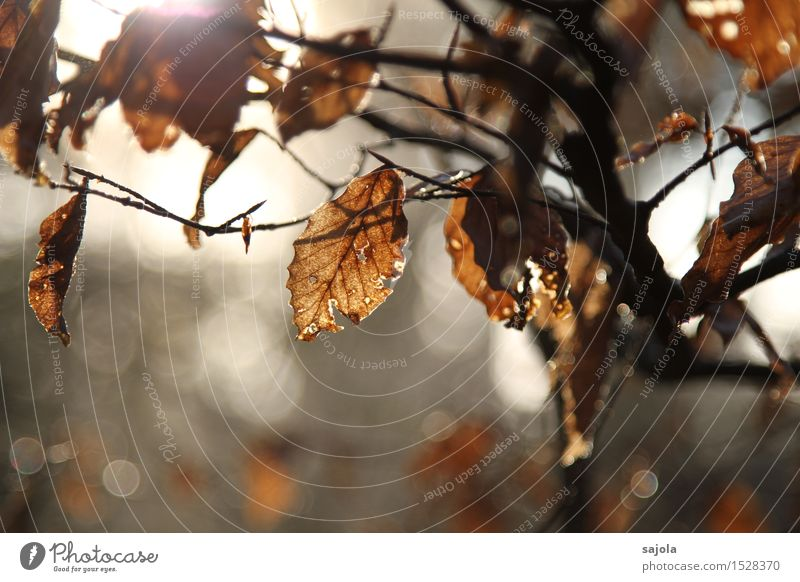 Autumn Environment Nature Plant Tree Leaf Forest Brown Decline Transience Withered Autumnal Autumn leaves Automn wood Autumnal weather Colour photo