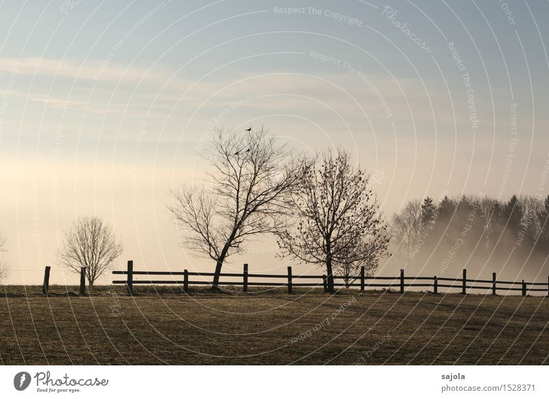 Sky Nature Plant Tree Landscape Clouds Environment Meadow Autumn Moody Weather Contentment Fog Esthetic Stand Fence